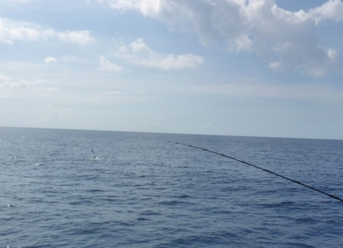 Sailfish Pulley Ridge