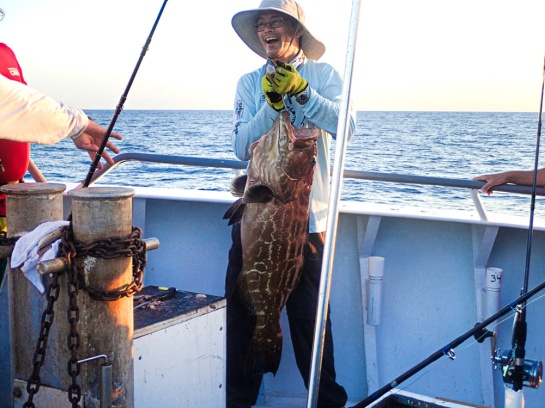 Gilberts Black Grouper-2