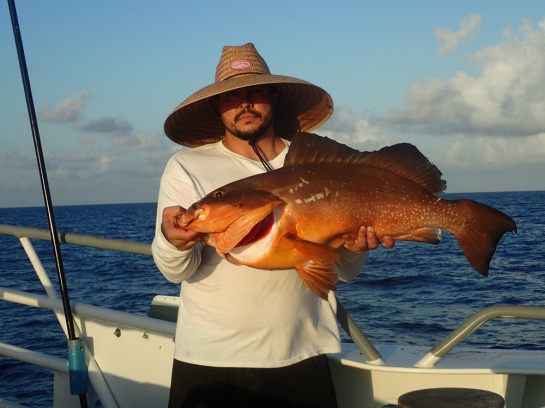 Nilson Red Grouper