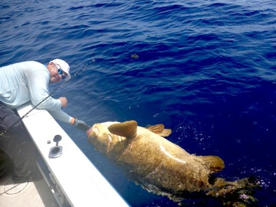 MarquesasRebbeca201841 Goliath Grouper