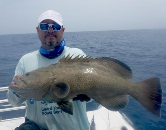 MarquesasRebbeca2018Black grouper