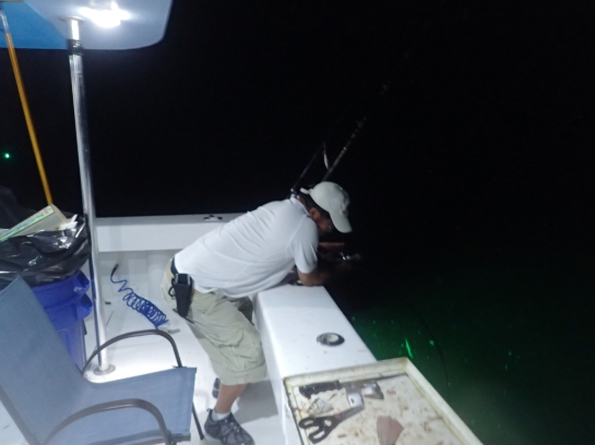 dry tortugas fishing