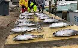 North Carolina Bluefin and Yellowfin Tuna 3/4 to 3/5/20